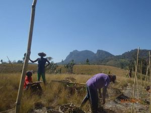 Reforestation work in Madagascar
