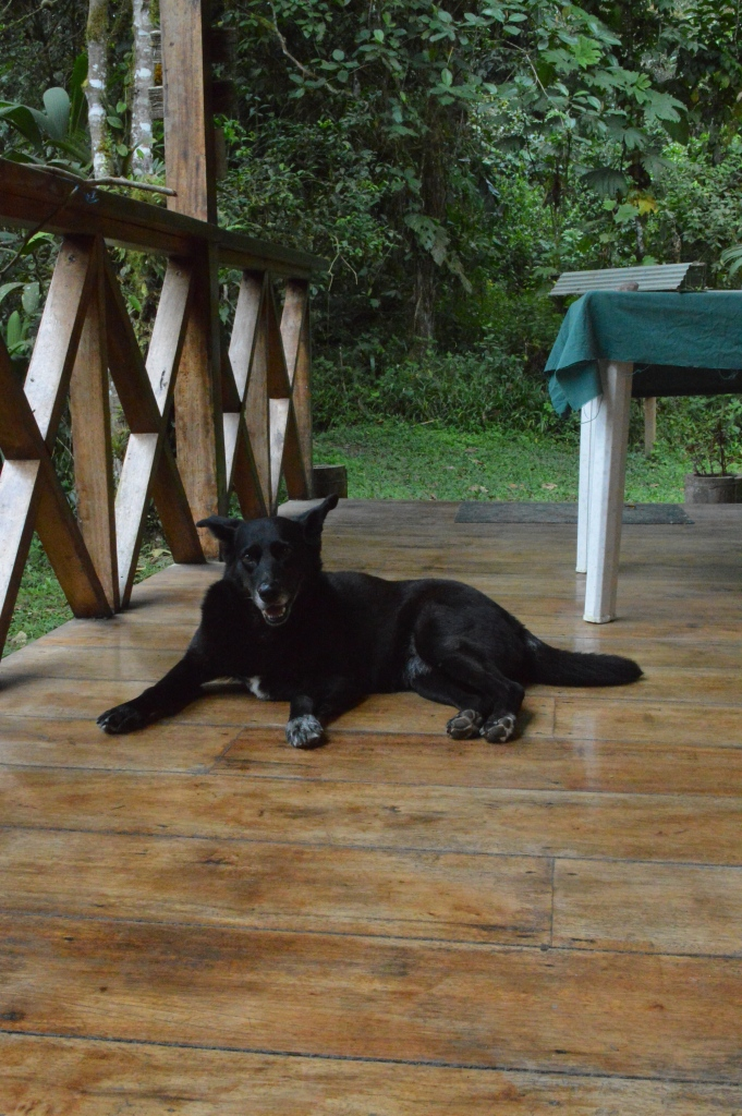 Holly on the porch at the lodge of Reserva Las Tangaras