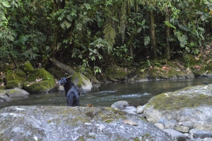 Holly next to the Rio Nambillo
