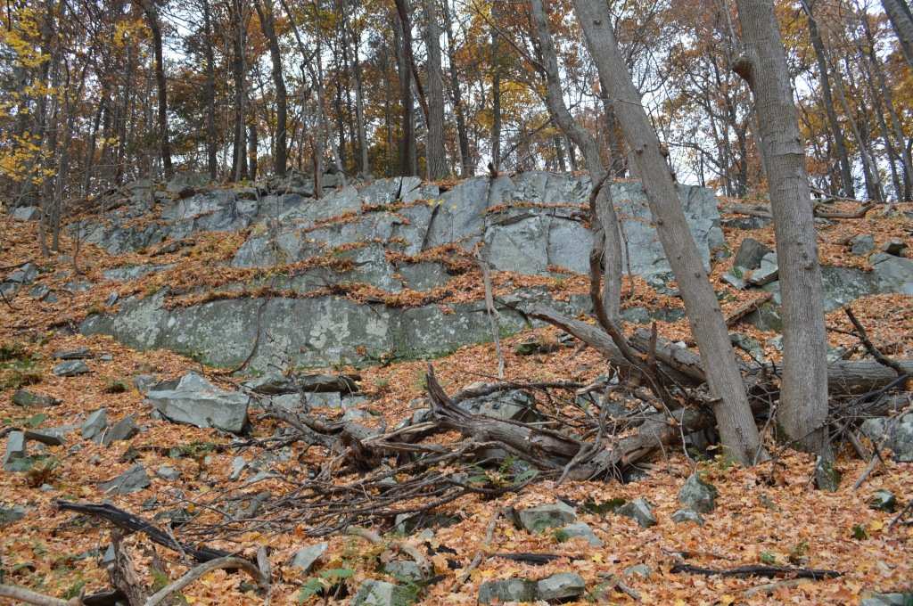A rock outcrop in the forest