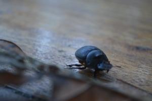 The Ecuadorian scarab again