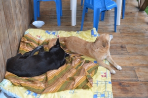 "Holly and her ""brother"" Spaz on a blanket we put out for them to sleep on when they visited."