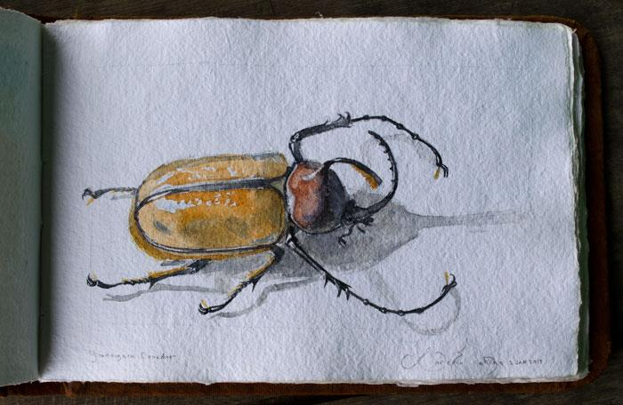 golofa-beetle-loren-eakins