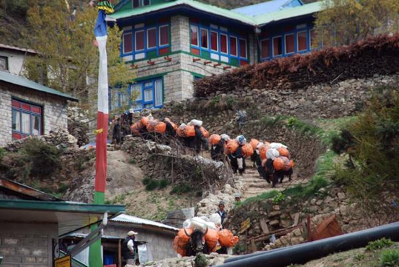Waste transportation by yaks