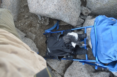 Zari in her customized dog bag just below the very summit of Shavano